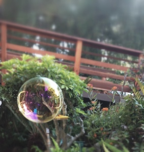 Photo of Bubble by Nicole Criona